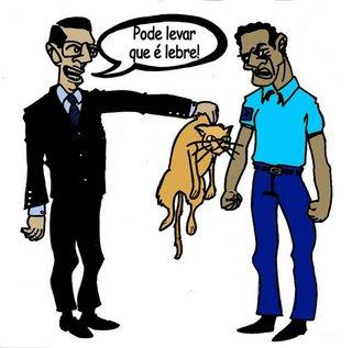 gato_lebre_